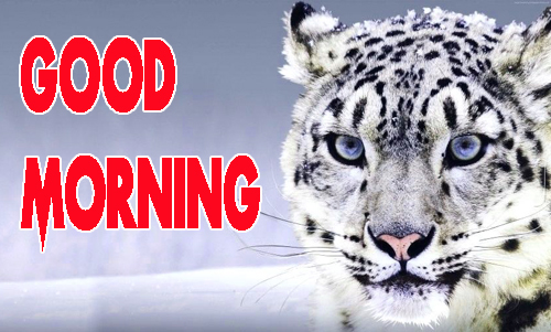 Animal Good Morning Wallpaper Pics Free Download