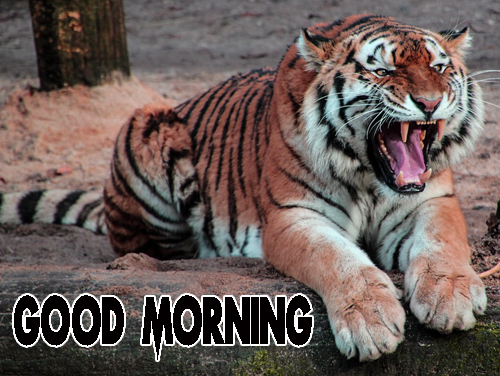 Animal Good Morning Pics Download