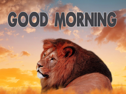 Animal Good Morning Images Wallpaper Pics Free Download