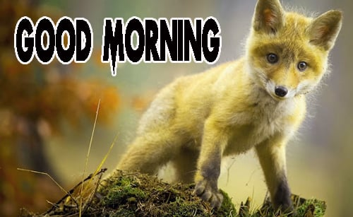 Animal Good Morning Pics Photo Download