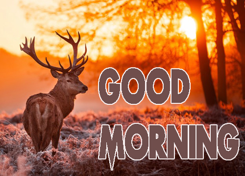 Animal Good Morning Photo Free Download