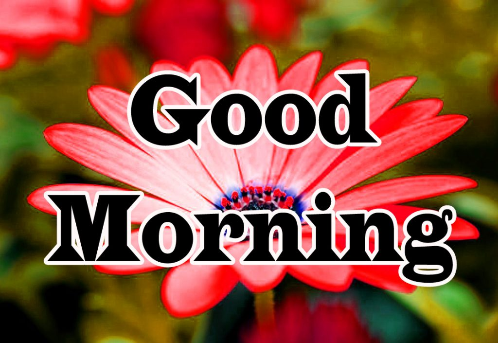 Flower Good Morning Wishes Images Download In HD