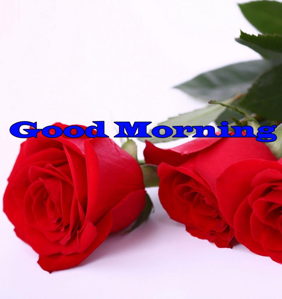 Flower Good Morning Wishes Pics Wallpaper Download