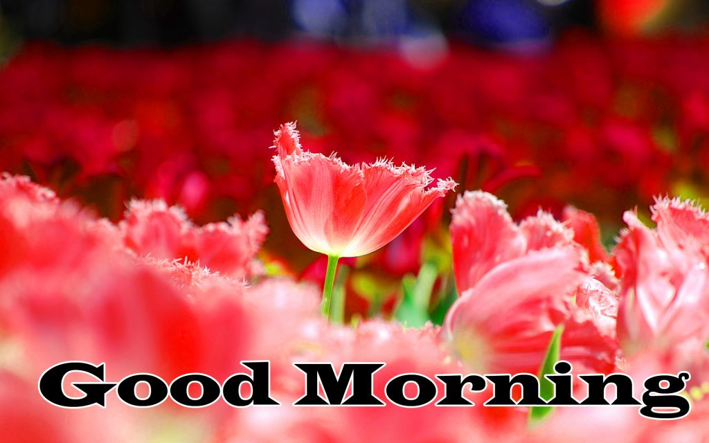 Flower Good Morning Wishes Wallpaper photo Download