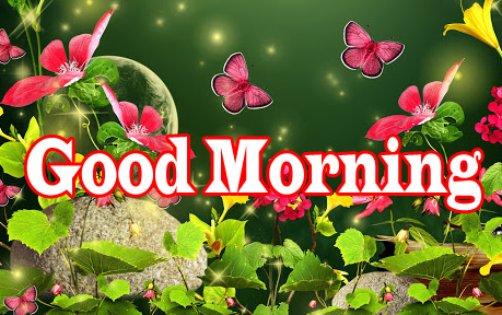Flower Good Morning Wishes Wallpaper Photo Download Free