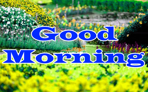 Flower Good Morning Wishes Photo Download
