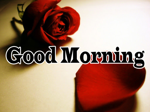 Flower Good Morning Wishes Pics pictures Download
