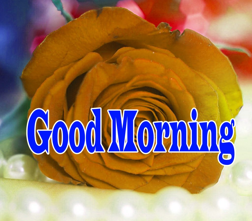 Flower Good Morning Wishes Wallpaper pics