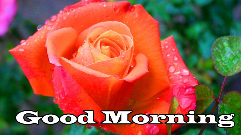 Flower Good Morning Wishes Photo Pics Download