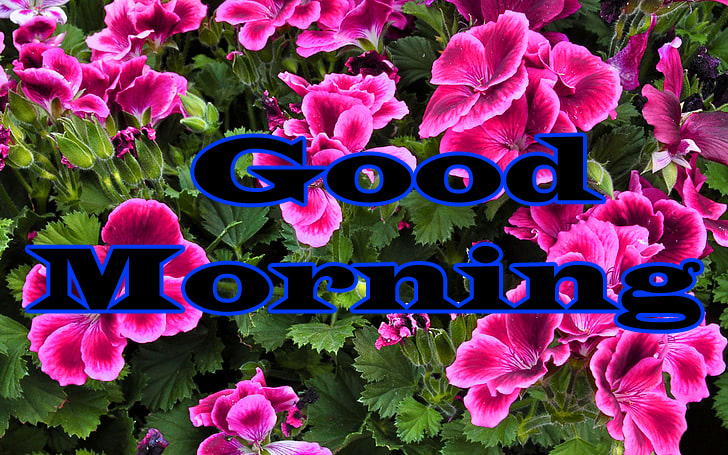 Flower Good Morning Wishes Images Download