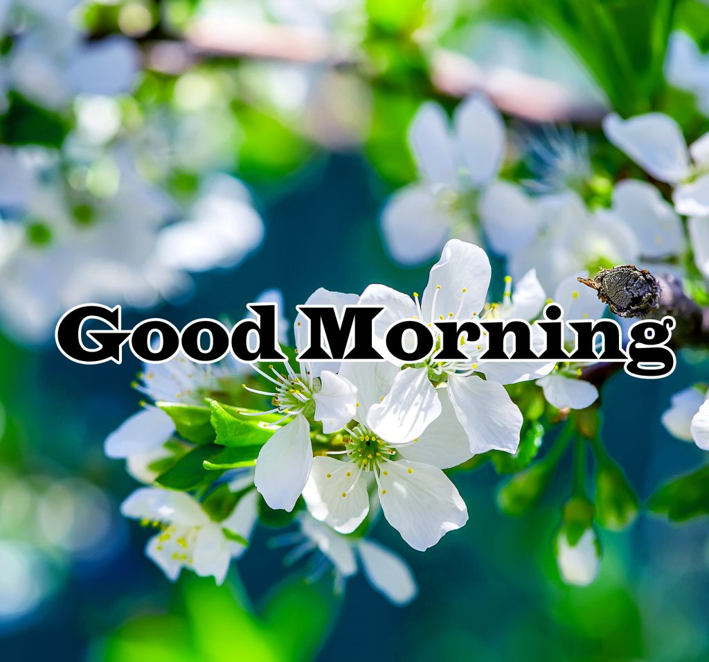 Flower Good Morning Wishes Pics Images Download