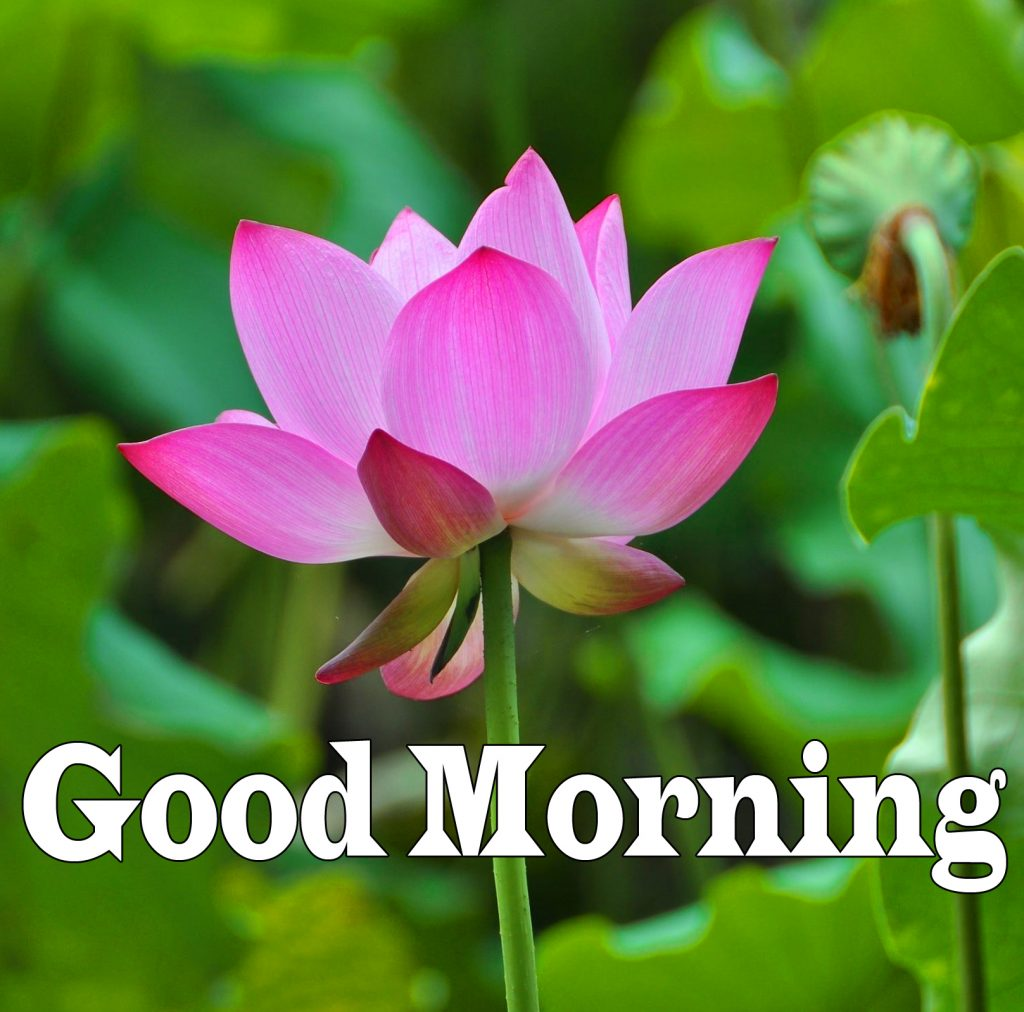 Flower Good Morning Images Wallpaper Download