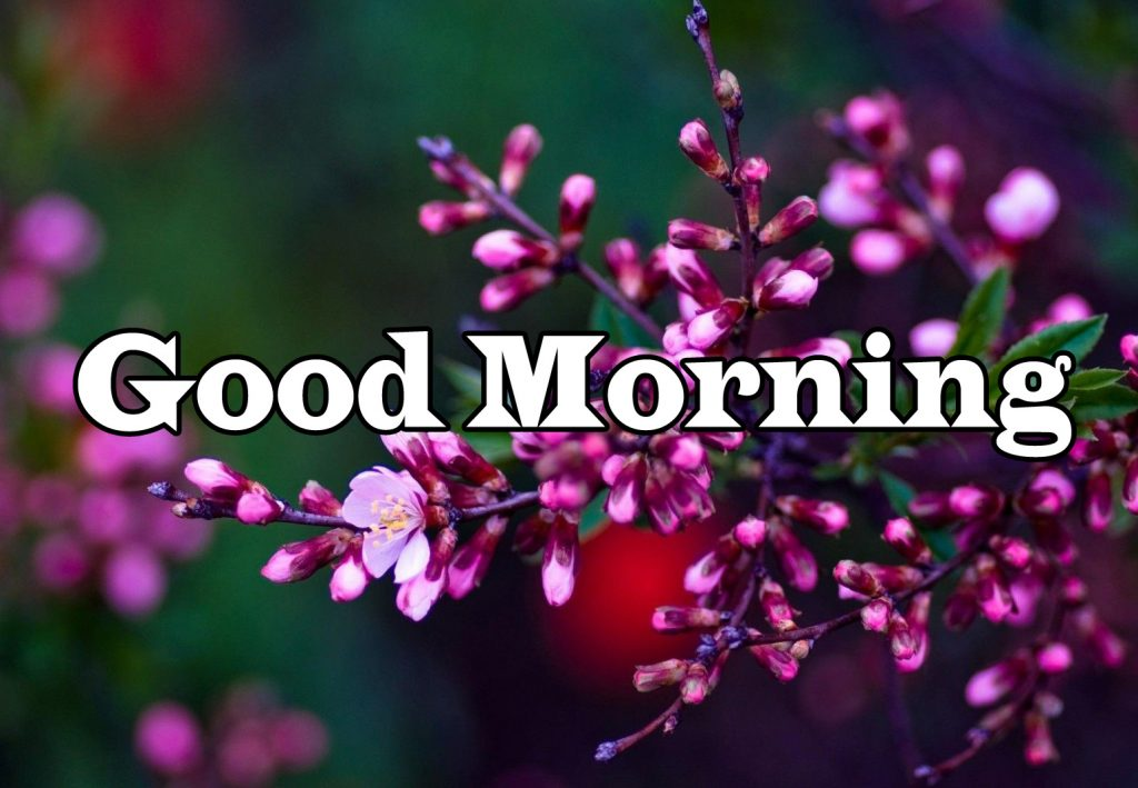 Flower Good Morning Wishes Photo Free Download