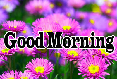 Flower Good Morning Wishes Photo Pic Download