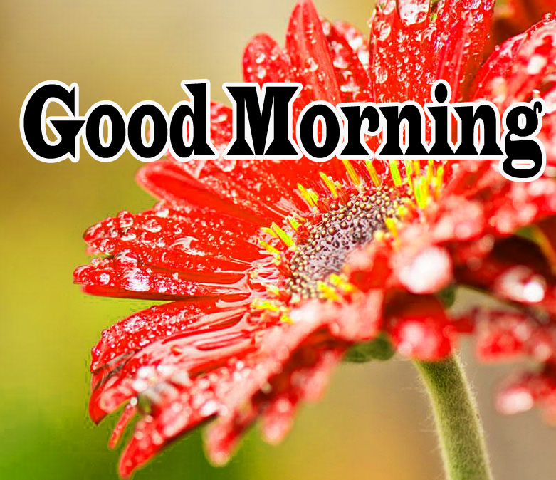 Flower Good Morning Wishes Images Pics Download