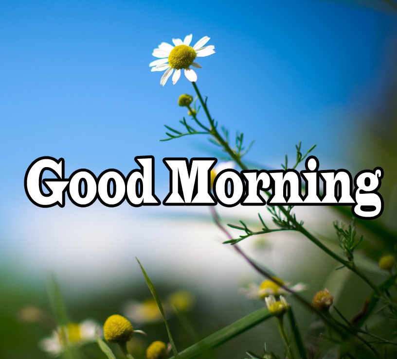 Flower Good Morning Wishes Pics Wallpaper Pics Download