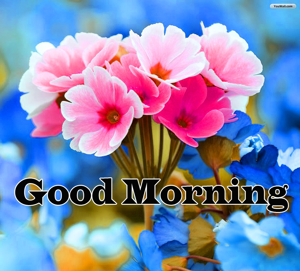 Flower Good Morning Wishes Pic Photo Download