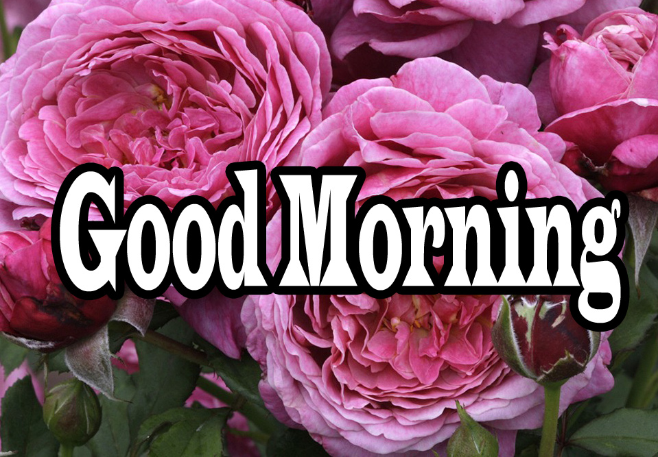 Flower Good Morning Wishes Wallpaper Pic Download