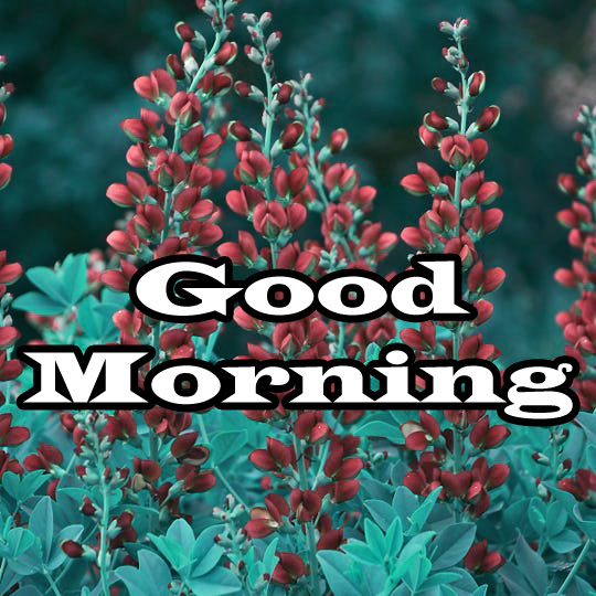 Flower Good Morning Wishes Pic Pictures PHOTO Download