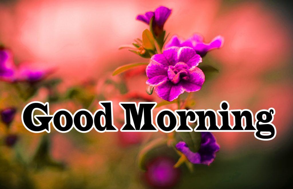 Flower Good Morning Wishes Images Pics Wallpaper Download