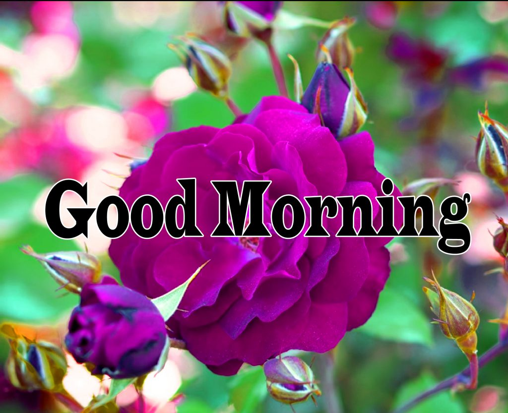 Flower Good Morning Wishes Images Photo Download