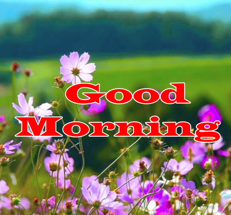 Flower Good Morning Wishes Images Pics Pictures Download