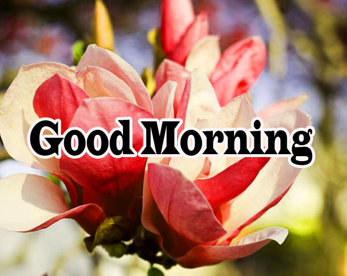 Flower Good Morning Wishes Images Pic Download
