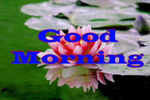Flower Good Morning Wishes Images for Facebook