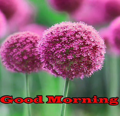 Flower Good Morning Wishes Photo pic Download Flower Good Morning Wishes