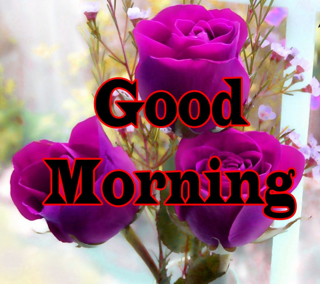 Flower Good Morning Wishes Images Wallpaper With Rose