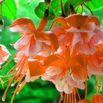 Beautiful Flower hd images Wallpaper Photo