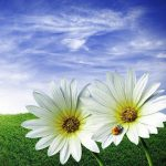 Beautiful Flower images for wallpaper