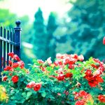 Beautiful Flower images for lover hd Download