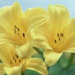 Beautiful Flower hd image Wallpaper Photo Pics Free for wife