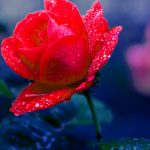 Beautiful Flower hd images