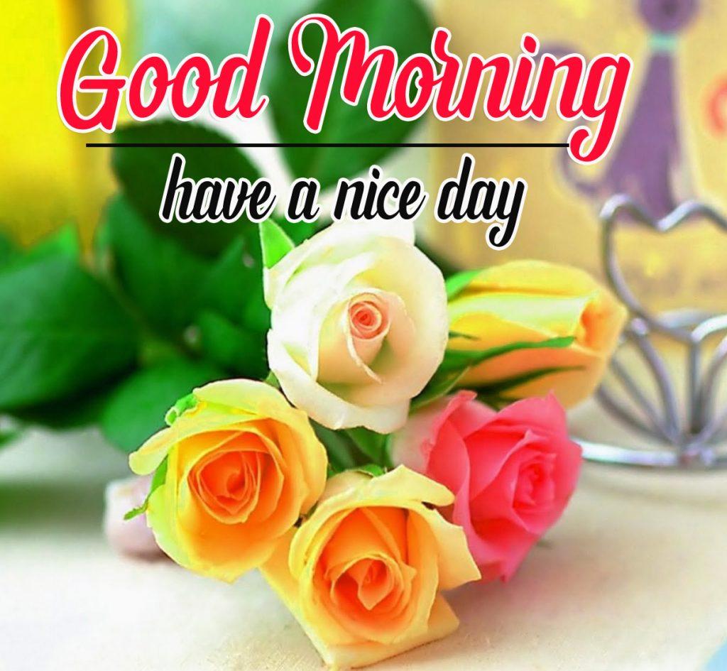 Beautiful Flowers Good Morning Pics Wallpaper Download