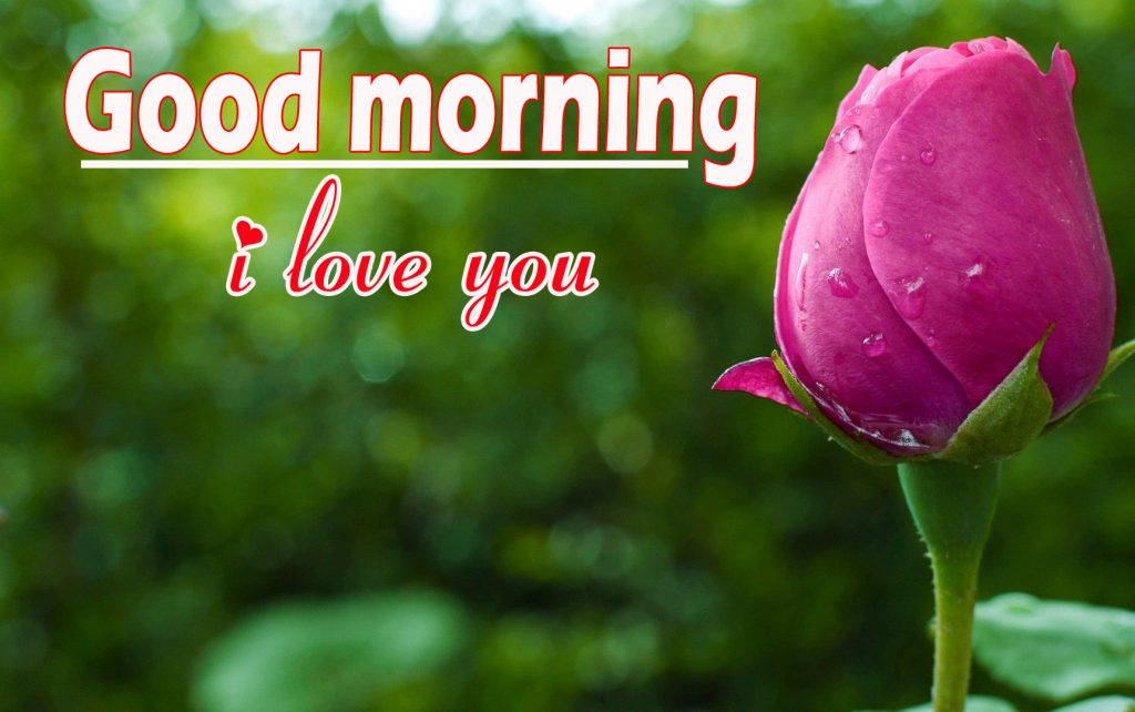 Beautiful  Flowers Good Morning Pics photo HD Download