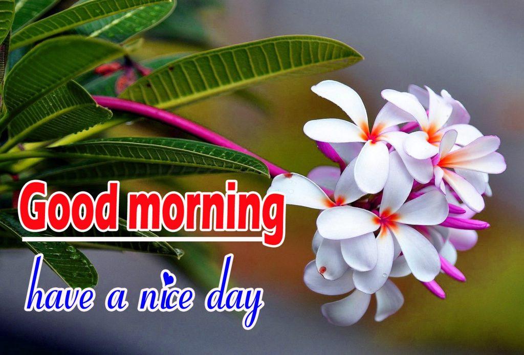 Beautiful Flowers Good Morning Wallpaper Pics Download