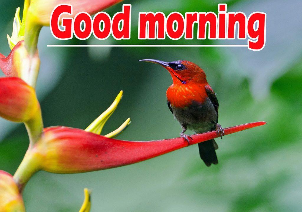 Beautiful Flowers Good Morning Pics Wallpaper HD Download