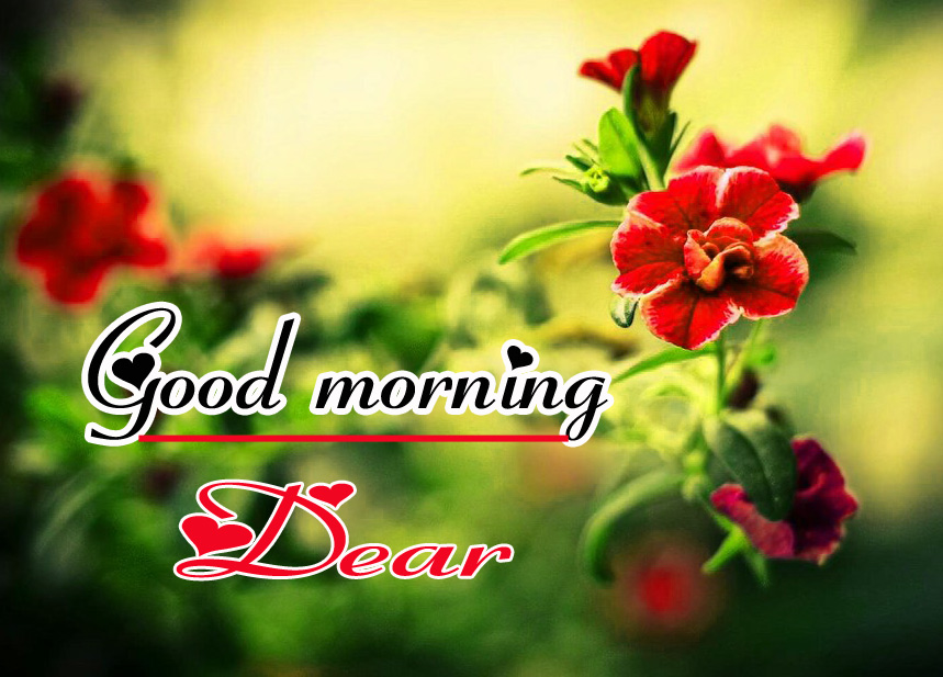 Flowers Good Morning Wallpaper Pics pictures Download