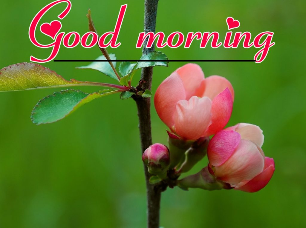 Flowers Good Morning Wallpaper Pics Download
