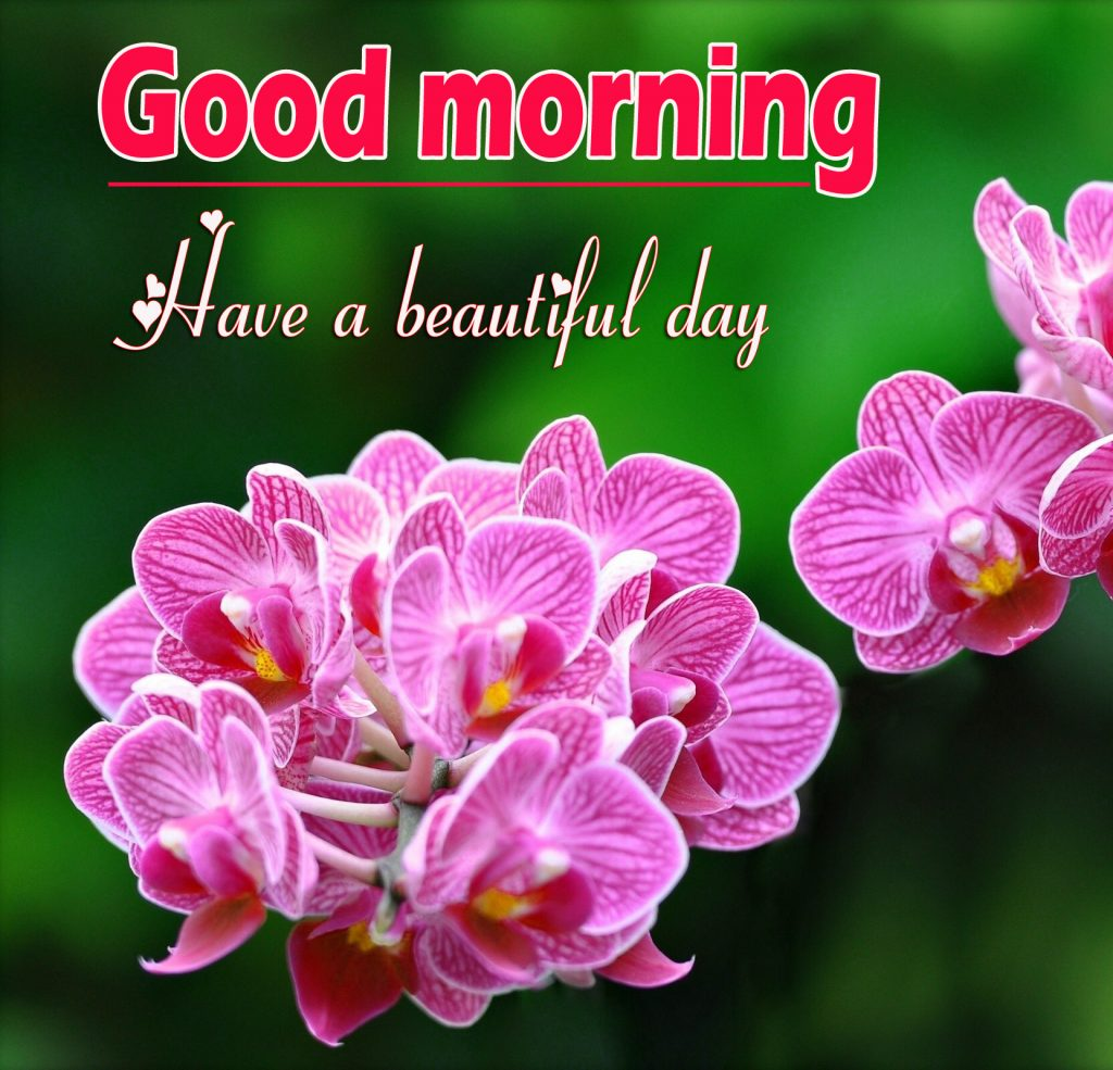 Flowers Good Morning Wallpaper Pics photo Download