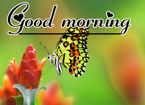Flowers Good Morning Wallpaper Photo pics Download