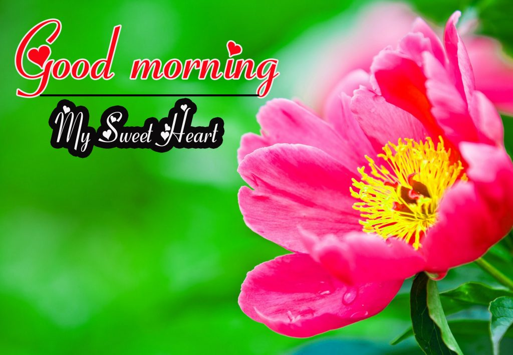Flowers Good Morning Wallpaper photo Pics Free Download