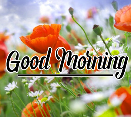Best Good Morning Images Wallpaper Pics Download