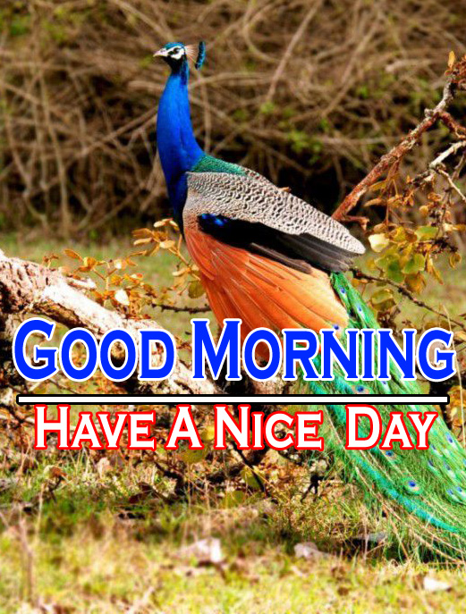 Beautiful Good Morning Wishes Images