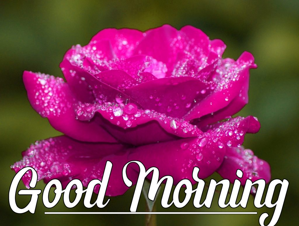Beautiful Good Morning Wishes Images Wallpaper Download