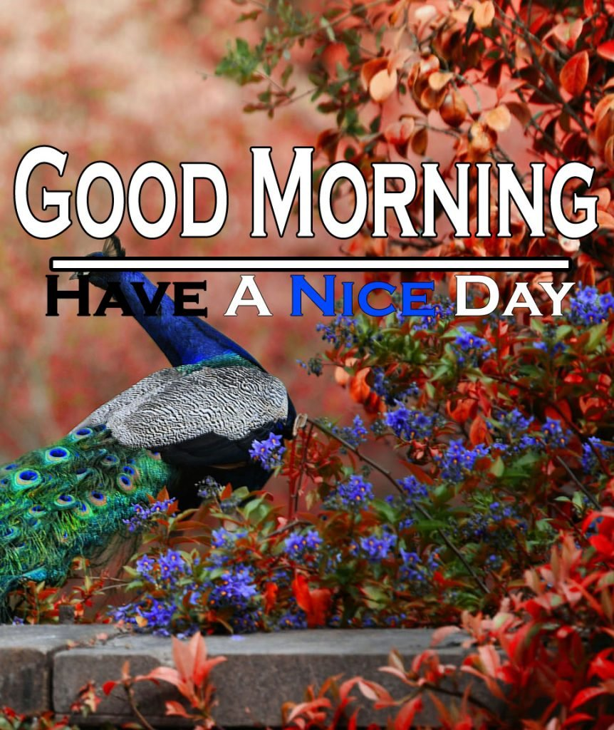 Beautiful Good Morning Wishes Images Wallpaper Pics Download