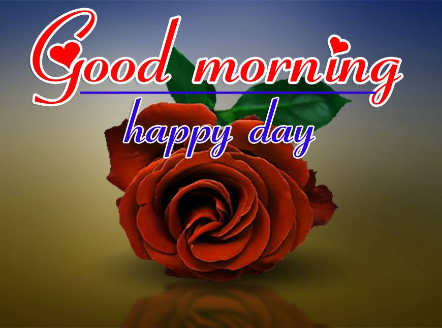 Good Morning HD Images Wallpaper With Red Rose