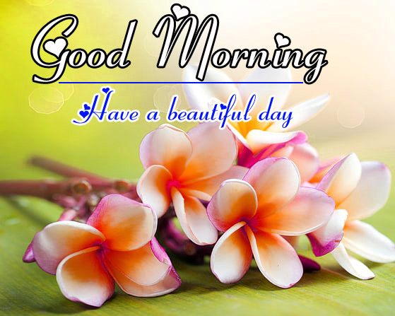 Good Morning HD Images Wallpaper Free Download